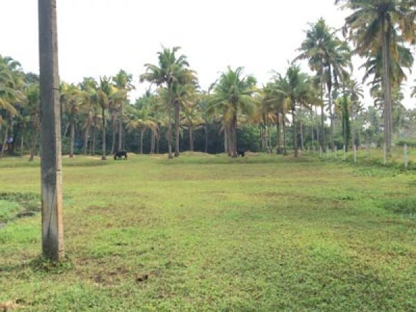 plot for sale parayankadavu 8