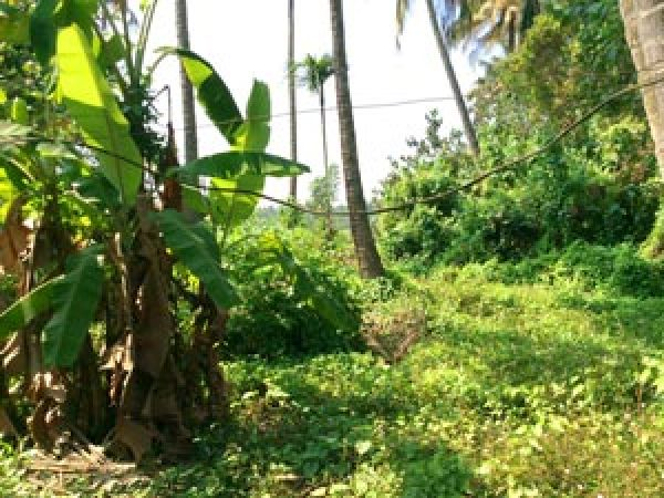 plot for sale moorkanad 2